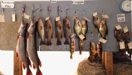 Winning Fish Board